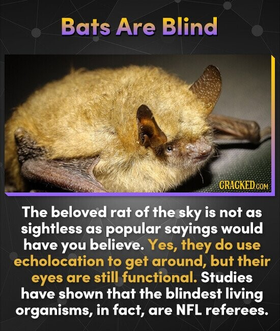 Bats Are Blind CRACKEDC COM The beloved rat of the sky is not as sightless as popular sayings would have you believe. Yes, they do use echolocation to