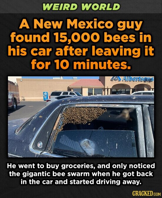 WEIRD WORLD A New Mexico guy found 15, .000 bees in his car after leaving it for 10 minutes. Aubentsous He went to buy groceries, and only noticed the gigantic bee swarm when he got back in the car and started driving away.