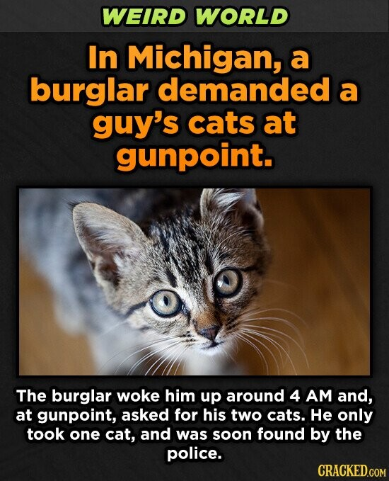 WEIRD WORLD In Michigan, a burglar demanded a guy's cats at gunpoint. The burglar woke him up around 4 AM and, at gunpoint, asked for his two cats. He only took one cat, and was soon found by the police. CRACKED.COM