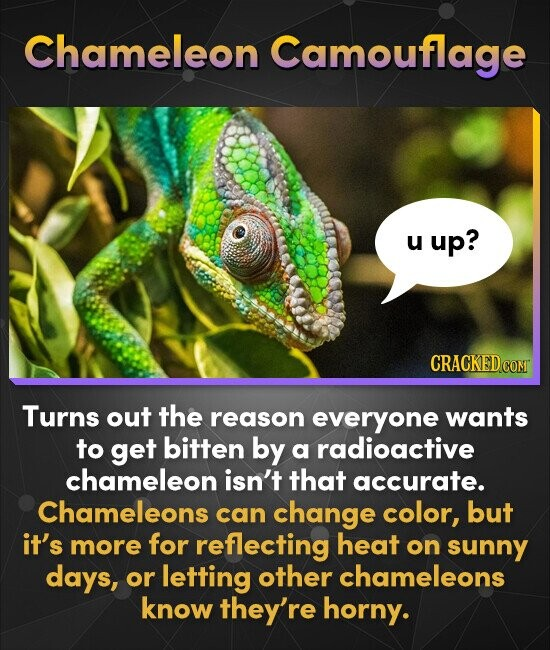 Chameleon Camouflage u up? CRACKEDcO Turns out the reason everyone wants to get bitten by a radioactive chameleon isn't that accurate. Chameleons can
