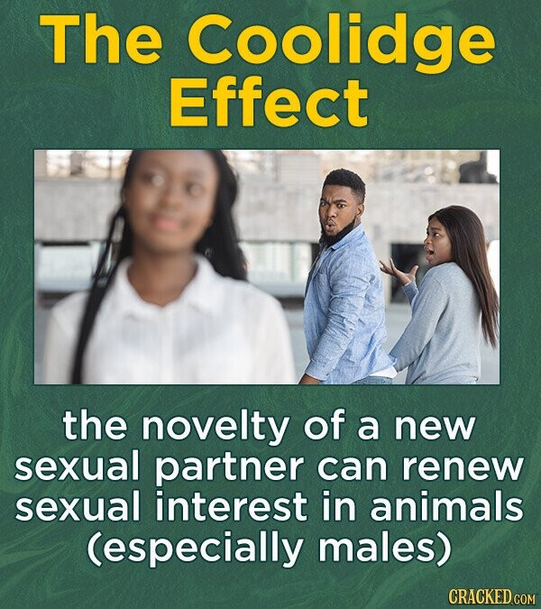 The Coolidge Effect the novelty of a new sexual partner can renew sexual interest in animals (especially males)