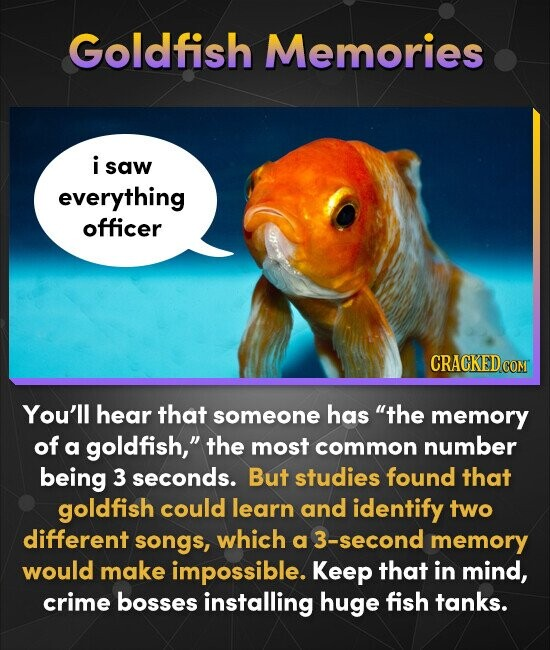 Goldfish Memories i saw everything officer CRACKED c COM You'll hear that someone has the memory of a goldfish, the most common number being 3 secon