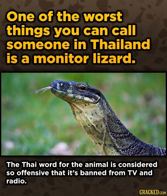 One of the worst things you can call someone in Thailand is a monitor lizard. The Thai word for the animal is considered so offensive that it's banned from TV and radio.