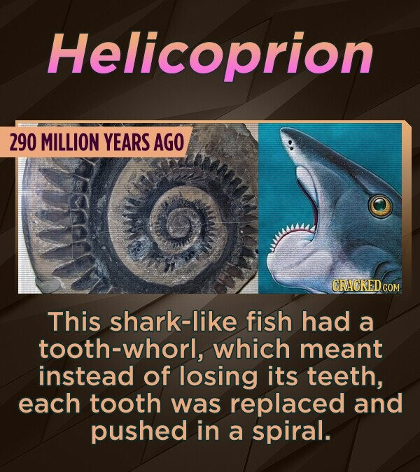 Helicoprion 290 MILLION YEARS AGO CRACKEDO This shark-like fish had a tooth-whorl, which meant instead of losing its teeth, each tooth was replaced an