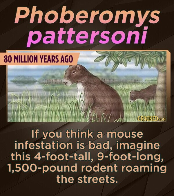 Phoberomvs pattersoni 80 MILLION YEARS AGO wou If you think a mouse infestation is bad, imagine this 4-foot-tall, 9-foot-long, ,500-pound rodent roami