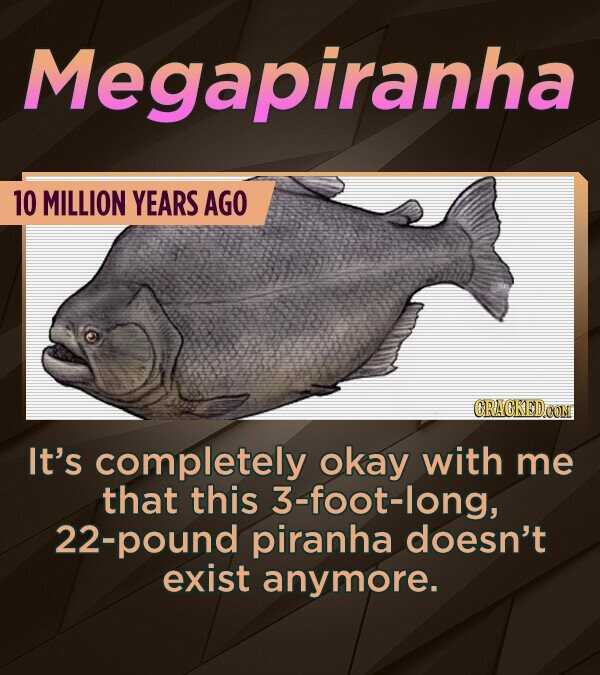 Megapiranha 10 MILLION YEARS AGO CRACKED OON It's completely okay with me that this 3-foot-long, 22-pound piranha doesn't exist anymore.
