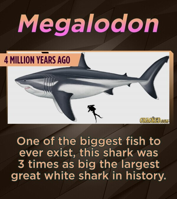 Megalodon 4 MILLION YEARS AGO CRACREDEOM One of the biggest fish to ever exist, this shark was 3 times as big the largest great white shark in history