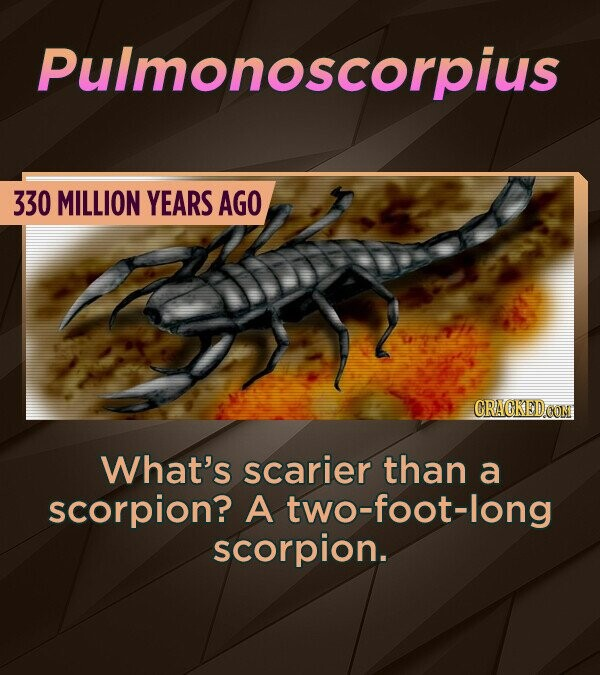 Pulmonoscorpius 330 MILLION YEARS AGO CRACKEDCON What's scarier than a scorpion? A two-foot-long scorpion.