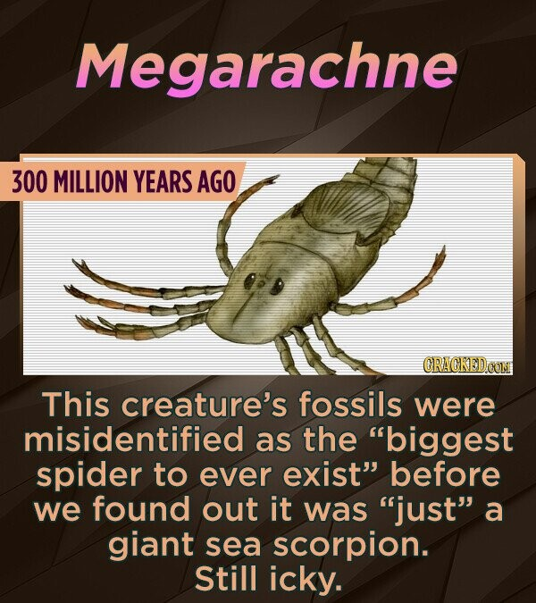 Megarachne 300 MILLION YEARS AGO CRACKEDCONM This creature's fossils were misidentified as the biggest spider to ever exist before we found out it w