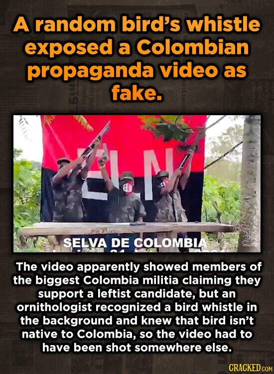 A random bird's whistle exposed a colombian propaganda video as fake. on ELK SELVA DE COLOMBIA The video apparently showed members of the biggest Colombia militia claiming they support a leftist candidate, but an ornithologist recognized a bird whistle in the background and knew that bird isn't native to Colombia,