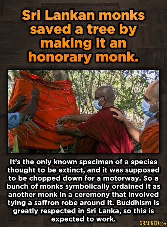 Sri Lankan monks saved a tree by making it an honorary monk. It's the only known specimen of a species thought to be extinct, and it was supposed to be chopped down for a motorway. So a bunch of monks symbolically ordained it as another monk in a ceremony that
