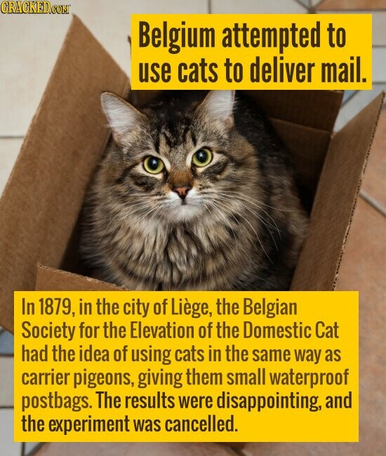 Belgium attempted to use cats to deliver mail. In 1879, in the city of Liege, the Belgian Society for the Elevation of the Domestic Cat ha
