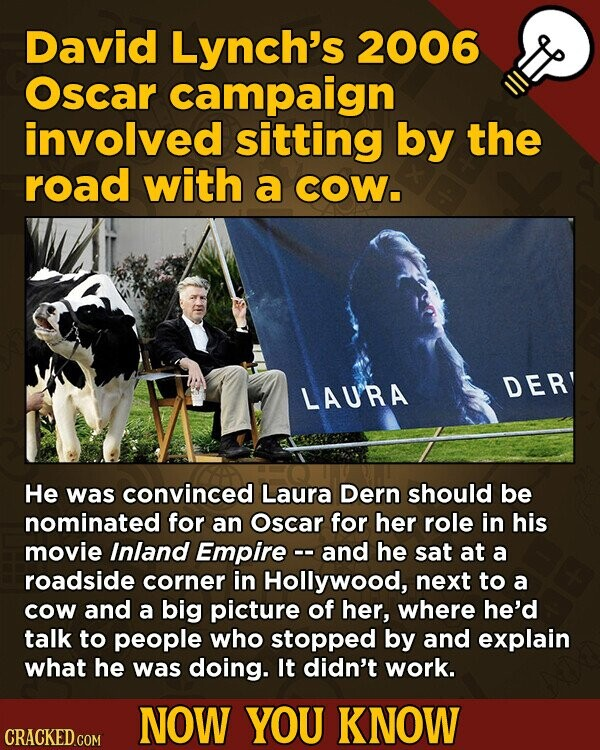 David Lynch's 2006 Oscar campaign involved sitting by the road with a COW. LAU'RA DER He was convinced Laura Dern should be nominated for an Oscar for her role in his movie Inland Empire -. and he sat at a roadside corner in Hollywood, next to a cow and a big