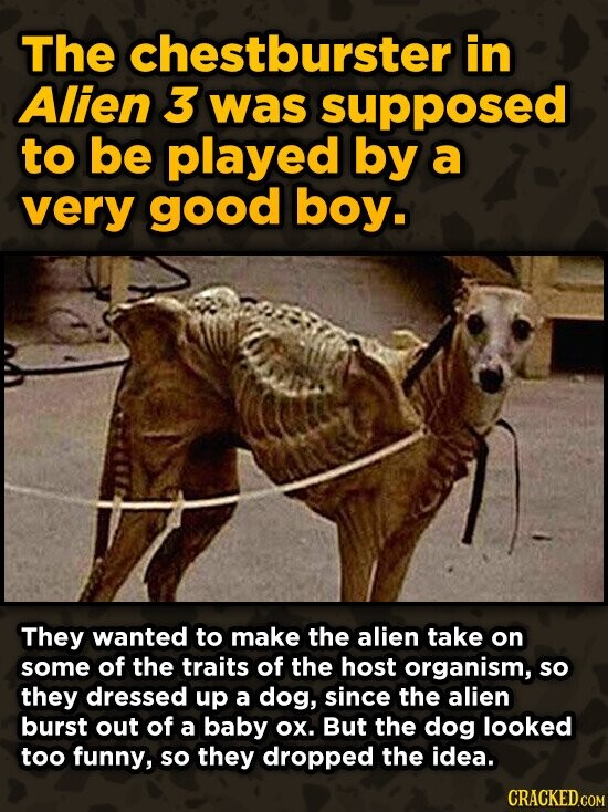 The chestburster in Alien 3 was supposed to be played by a very good boy. They wanted to make the alien take on some of the traits of the host organis