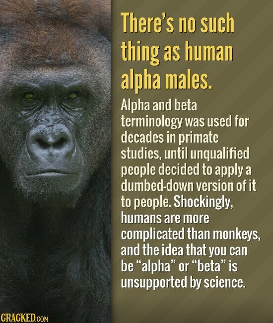 There's no such thing as human alpha males. Alpha and beta terminology was used for decades in primate studies, until unqualified people decided to apply a dumbed-down version of it to people. Shockingly, humans are more complicated than monkeys, and the idea that you can be alpha or beta is