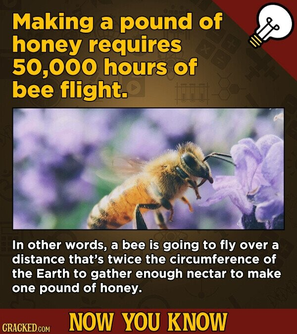 Making a pound of honey requires 000 hours of bee flight. frr In other words, a bee is going to fly over a distance that's twice the circumference of the Earth to gather enough nectar to make one pound of honey. NOW YOU KNOW CRACKED COM