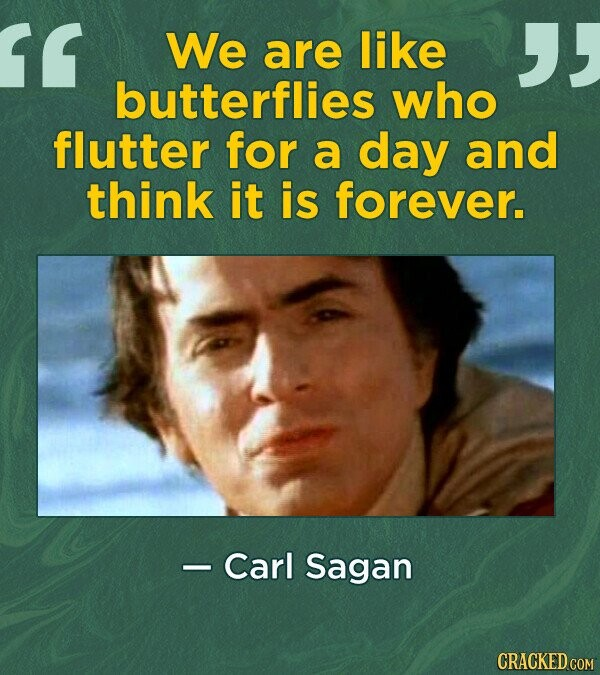 We are like butterflies who flutter for a day and think it is forever. - Carl Sagan
