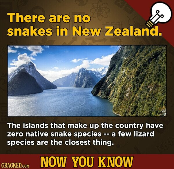 There are no snakes in New Zealand. The islands that make up the country have zero native snake species -- a few lizard species are the closest thing. NOW YOU KNOW CRACKED COM