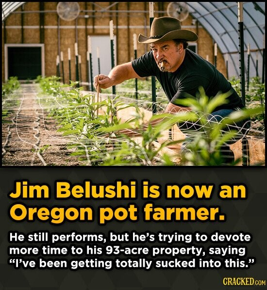 Jim Belushi is now an Oregon pot farmer. He still performs, but he's trying to devote more time to his 93-acre property, saying I've been getting tot