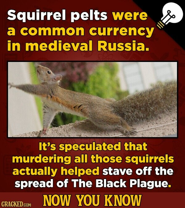 Squirrel pelts were a common currency in medieval Russia. It's speculated that murdering all those squirrels actually helped stave off the spread of T