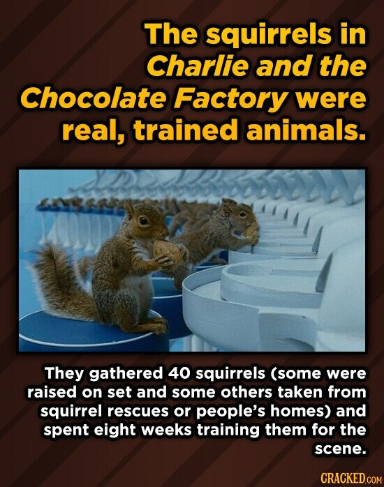 The squirrels in Charlie and the Chocolate Factory were real, trained animals. They gathered 40 squirrels (some were raised on set and some others taken from squirrel rescues or people's homes) and spent eight weeks training them for the scene.
