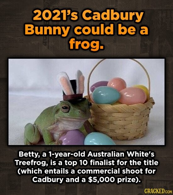 2021's Cadbury Bunny could be a frog. Betty, a 1-year-old Australian White's Treefrog, is a top 10 finalist for the title (which entails a commercial shoot for Cadbury and a $5,000 prize). CRACKED.COM
