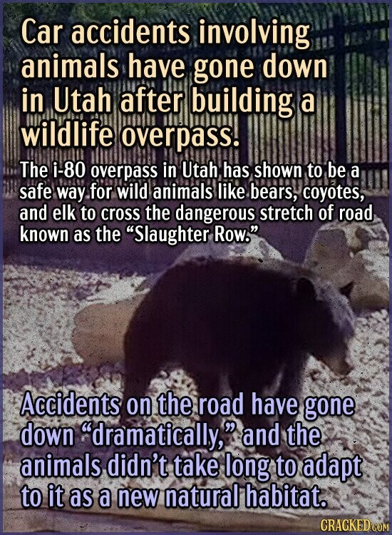 Car accidents involving animals have gone down in Utah after building a wildlife overpass! The i-80 overpass in Utah has shown to be a safe way for wi