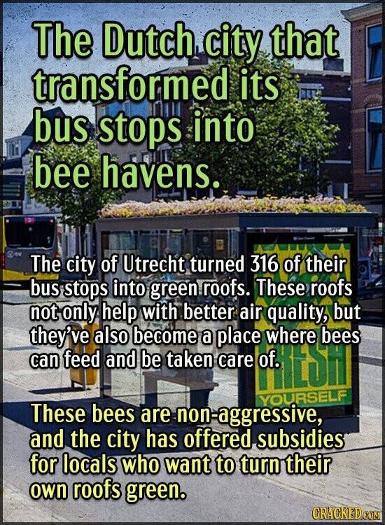 The Dutch city that transformed its bus stops into bee havens. The city of Utrecht turned 316 of their bus stops into green roofs. These roofs not onl