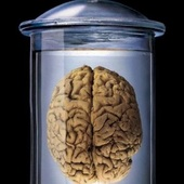 brain-in-a-jar