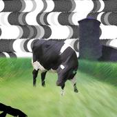 CowJangles Cracked photo