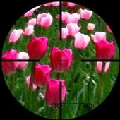 tulipsniper
