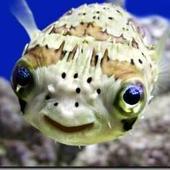 Crumfish