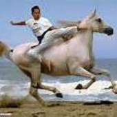 Karate_Horse