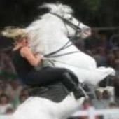 Karate-Horse