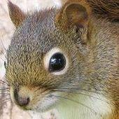 squirrelyone
