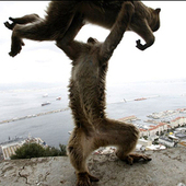 Monkeyking27