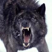 Redwolf915