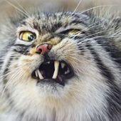 Catbeer100 Cracked photo