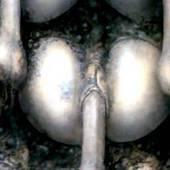 -Scorpio Cracked photo