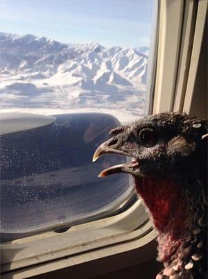 It doesn't even need to be <a href=https://www.irishmirror.ie/news/weird-news/turkey-plane-woman-reveals-bizarre-7188064 target=_blank>a dog</a>.