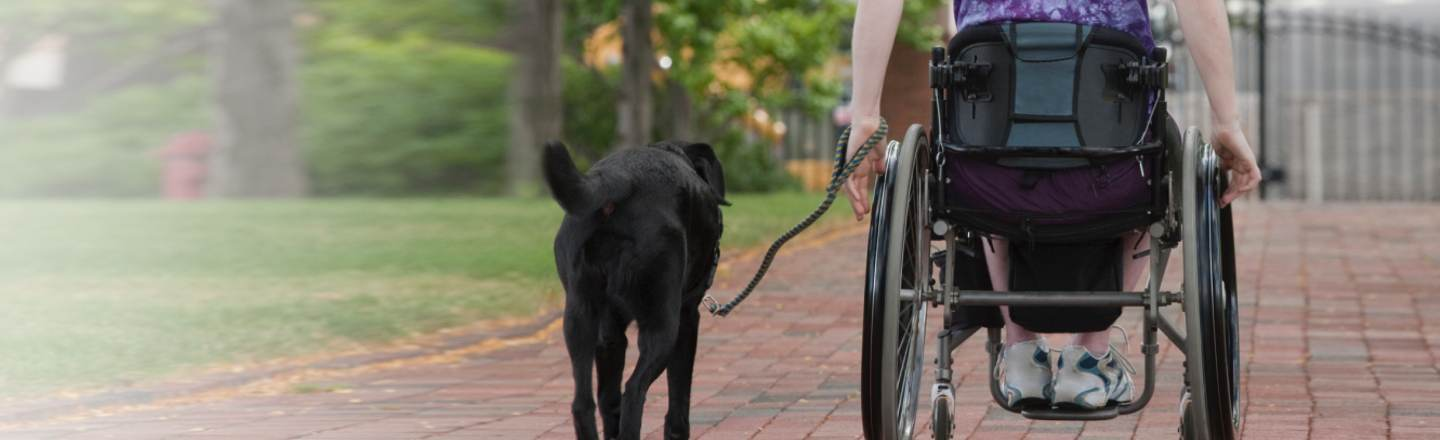 6 Things You Learn Training, And Owning, Service Dogs