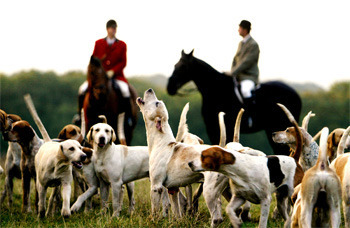 6 Strange (Sometimes Illegal) Realities Of Fox Hunting