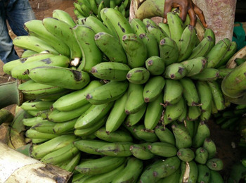 6 Reasons Bananas Are On The Brink Of Extinction