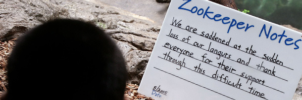 We Hate Pandas: 6 Realities Of Life As A Zookeeper