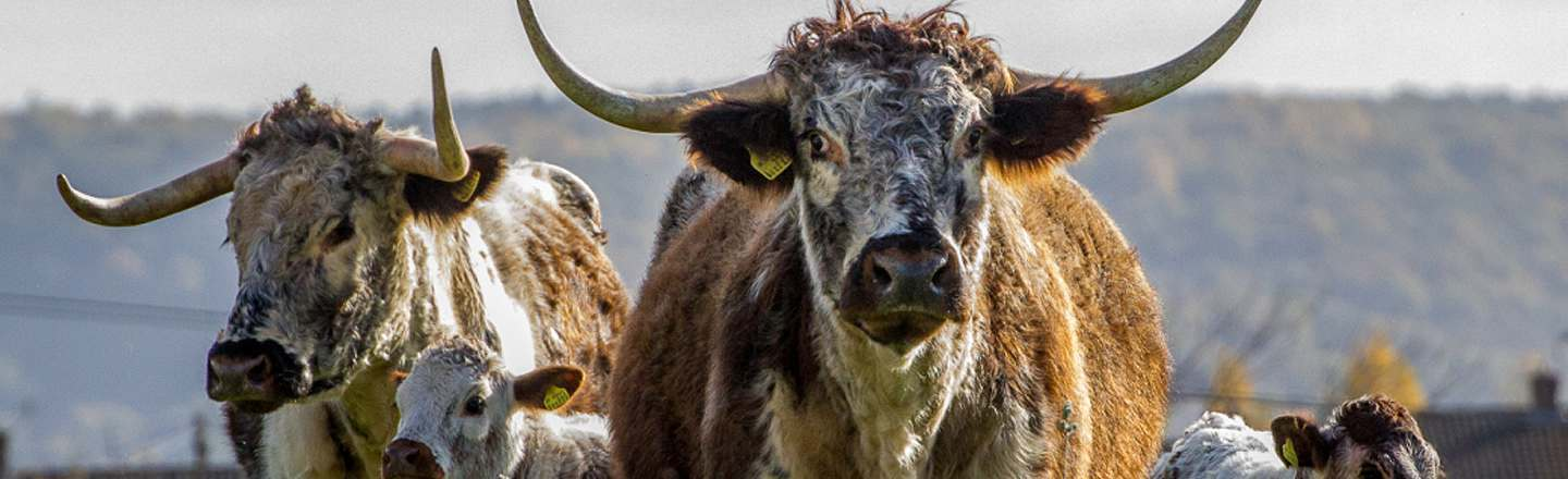 I Trick Bulls Into Gay Sex: 5 Realities Behind Your Beef