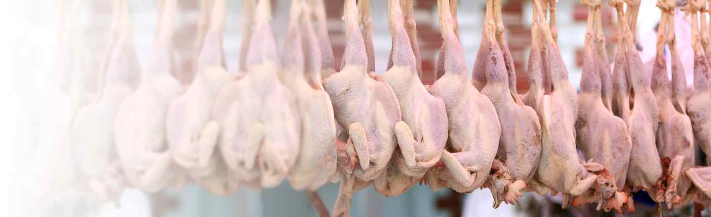 5 Things I Learned Slaughtering Millions Of Chickens
