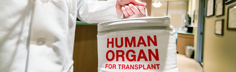 6 Bizarre Realities Of Working In An Organ Bank