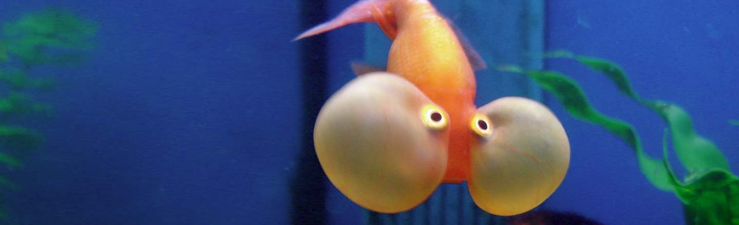 6 Gruesome Things You See Working In An Aquarium