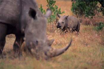 5 Ways Saving Wildlife Has Turned Into All-Out Warfare