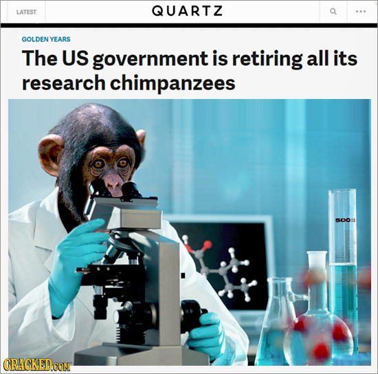 QUARTZ LATEST GOLDEN YEARS The US government is retiring all its research chimpanzees S0O: CRACKEDCONT